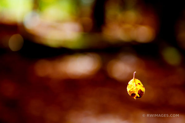 LEAF ADIRONDACK MOUNTAINS FALL AUTUMN COLORS NATURE ABSTRACT