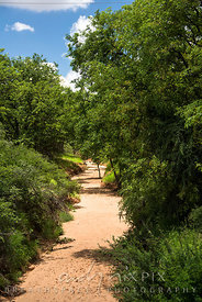 A sandy dry river bed lined with lush green trees.