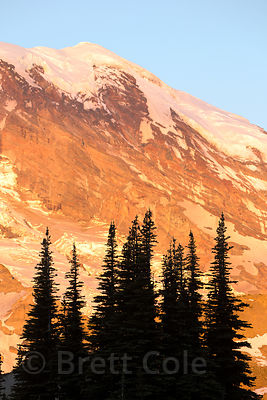 Subalpine forest and Rainier at sunset from Sourdough Ridge, Mount Rainier National Park, Washington