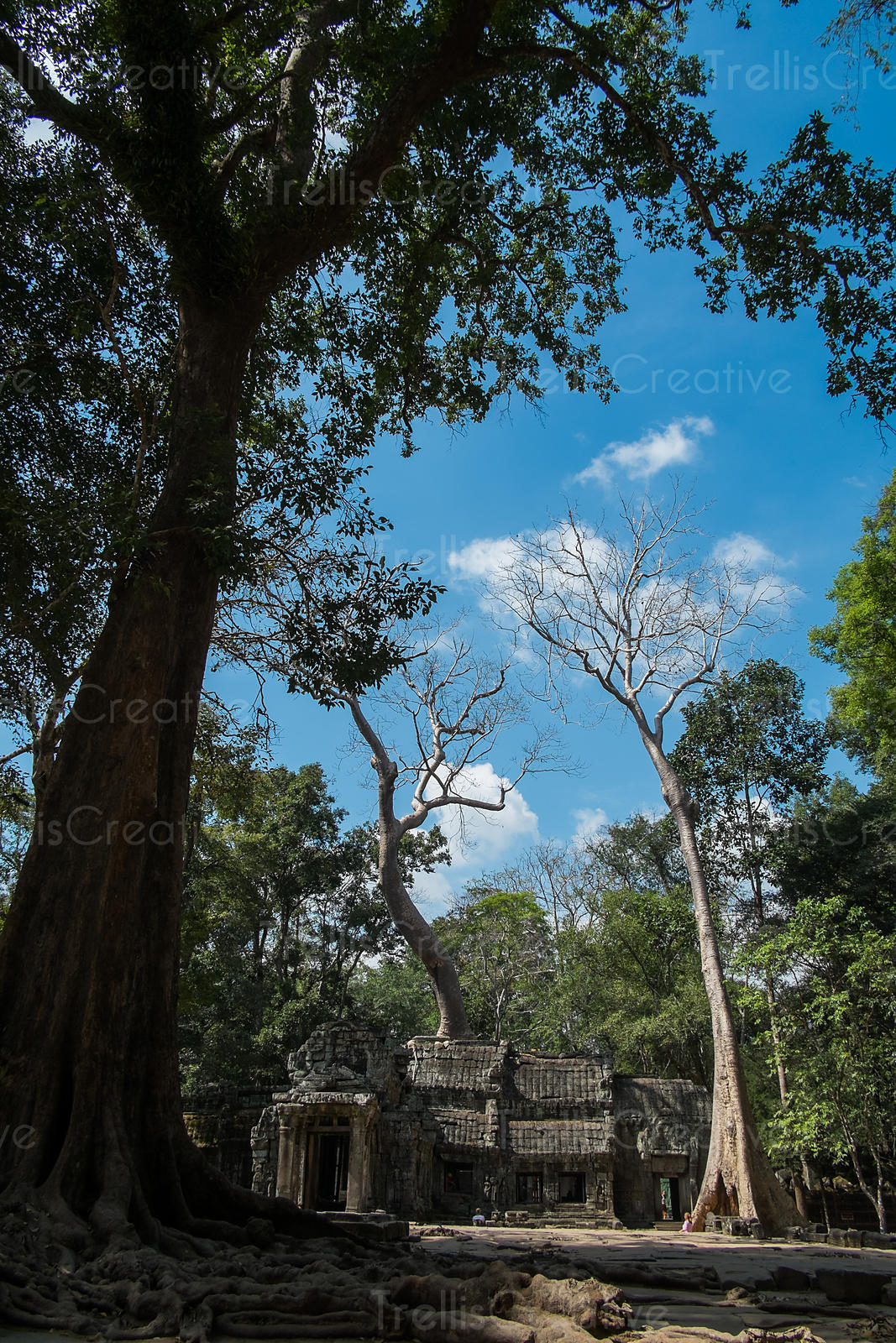 Trees growing around the old ruins of a Temple