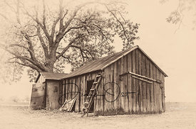 Barn-with-Ladder-and-Live-Oak-Sepia