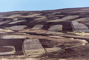 Patchwork moorland, showing where heather has been burnt in previos seasons. North Yorkshire, UK.
