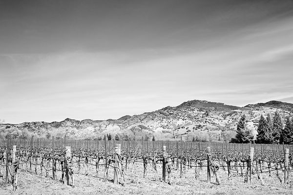 VINEYARD NAPA VALLEY BLACK AND WHITE