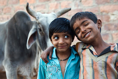 Two boys and a large steer, Jodhpur, Rajasthan, India