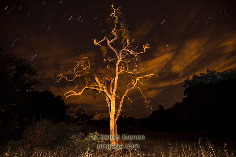 Light Painted Tree at Night, Joseph D Grant County Park, San Jose, CA, USA