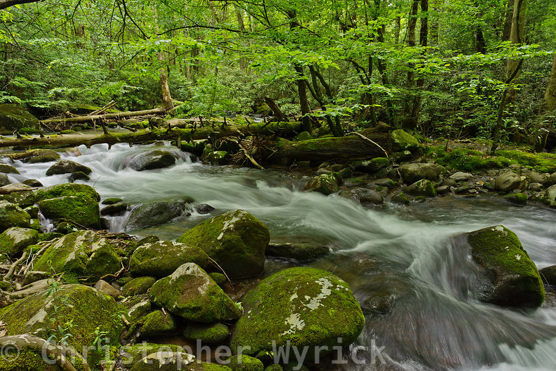 Beautiful shot of one of the most lovely rivers in the park, Porter's Creek.  It makes a beautiful wall-hanger.