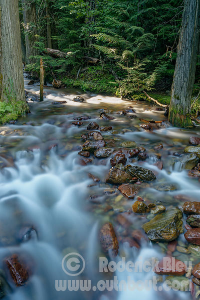 Johson Creek Blur