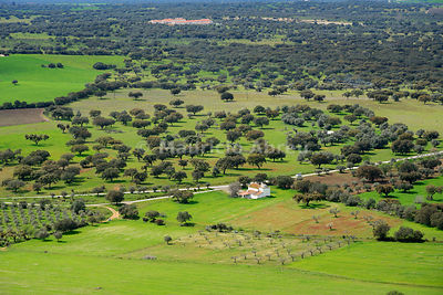 Holm oaks and cork oaks near Monsaraz. Portugal is the biggest producer of cork in the world. Alentejo, Portugal