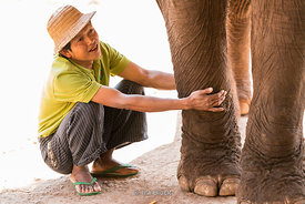 Workers with elephants at the Green Hill Valley Elephant camp in Magway Village near Bagan,Myanmar.
