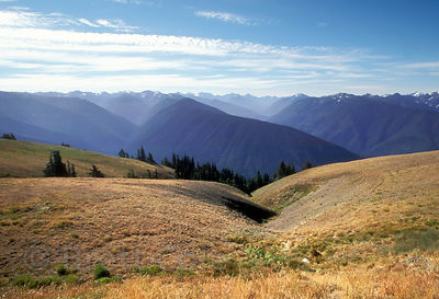 Huge expanse of virgin rainforest from Hurricane Ridge, Olympic Peninsula, Washington.