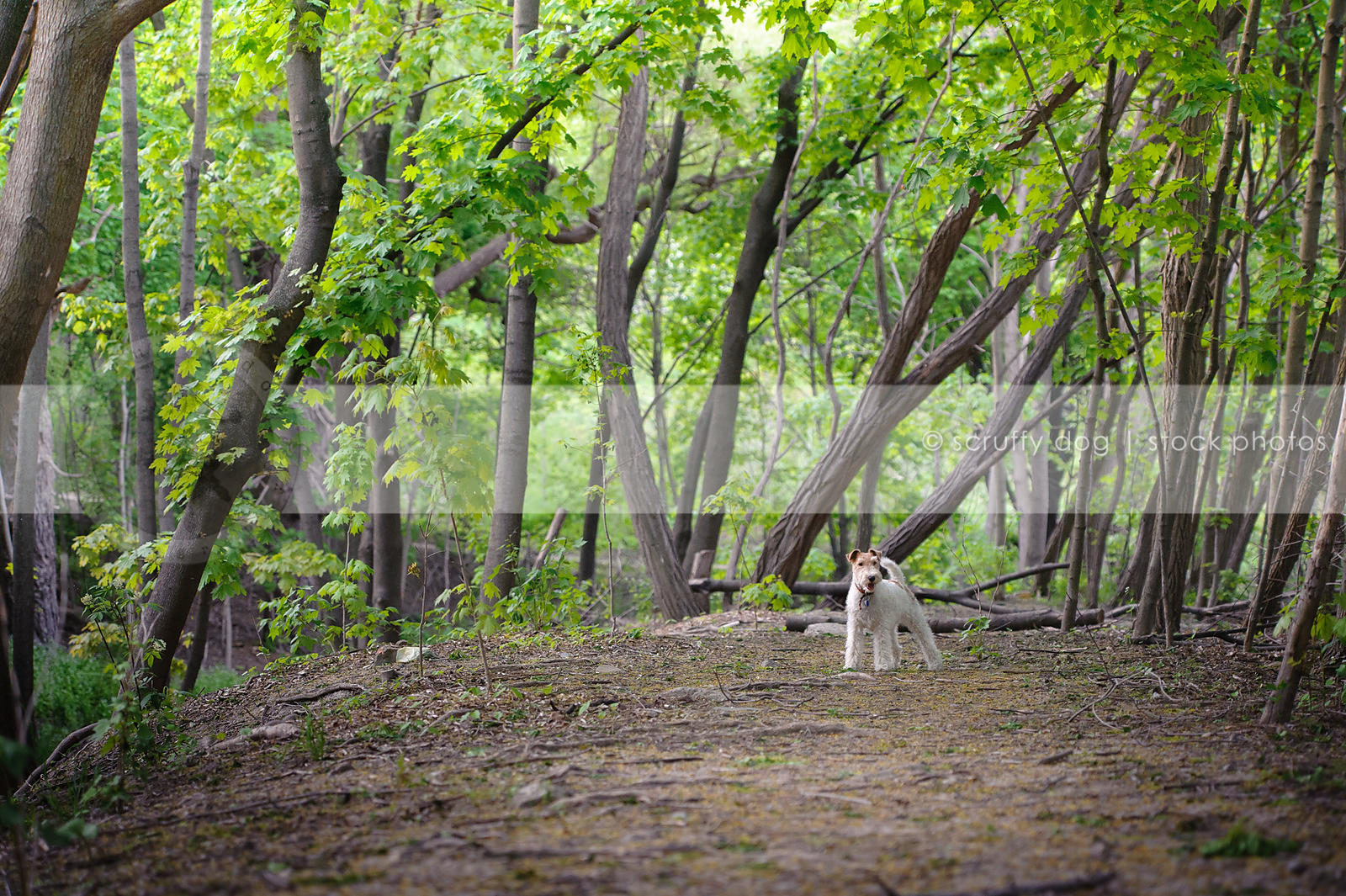 small white dog standing in trees