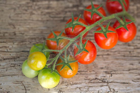 red and green cherry tomatoes on vine against wood from above