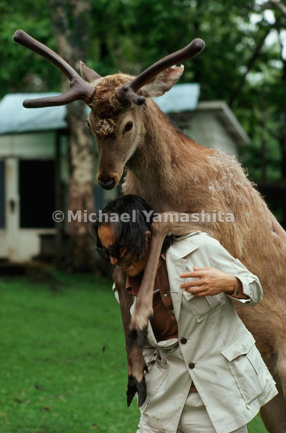 Body language expresses affection between Jack, a stag, and animal writer Masanori Hata, who raised the Ezo deer at his Animal KIngdom menagerie (Ezo is the archaic name for Hokkaido).