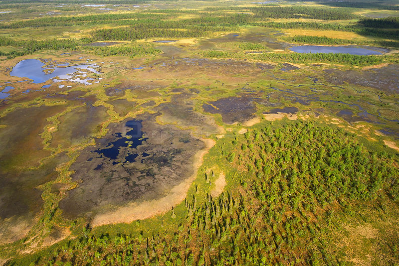 Aerial view of peat bogs and taiga, Sjaunja Bird Protection Area, Greater Laponia Rewilding Area, Lapland, Norrbotten, Sweden, June 2013.