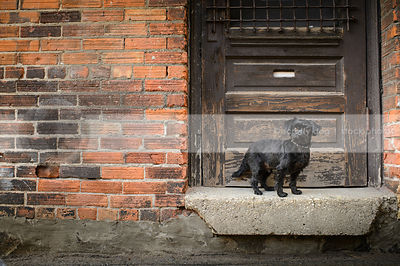 small groomed black dog staring from  doorstoop in brick alley