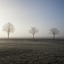 Three trees in the fog
