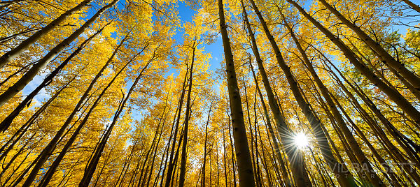 Sun and Aspens | Vail, CO