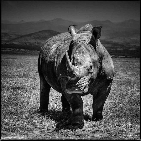 Rhinocerotidae photos