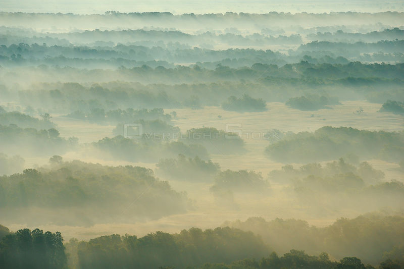 Aerial view over the Letea forest at sunrise, Danube delta rewilding area, Romania, June 2012