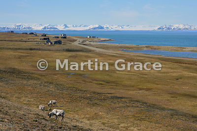 View from Svalbard airport, Longyear, with foreground Svalbard Reindeer (Rangifer tarandus platyrhynchus) and looking across Isfjorden to the snowy mountains of Oscar II Land, Svalbard