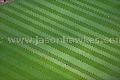 Aerial view of striped pitch grass