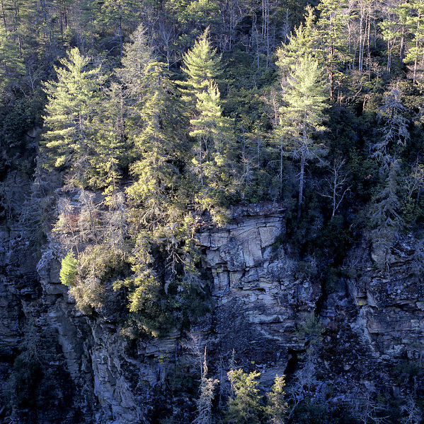 043-Blue_Ridge_D145216_Blue_Ridge_In_Early_Spring_-_Waterfall_Canyon_06_Preview