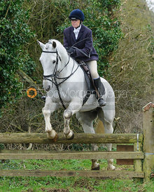 Monica Tebbutt-Wheat jumping a hunt jump near Knossington Spinney