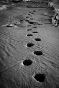 0021-Footprints_of_polar_bear_Baffin_Island_Canada_2016_Laurent_Baheux