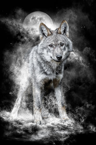 Art-Digital-Alain-Thimmesch-Loup-43