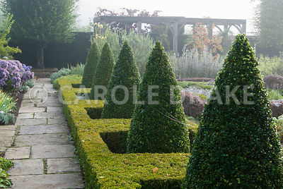 Clipped box cones rise from a frame of golden box in the Formal Garden, with vine draped pergola beyond. Waterperry Gardens, Wheatley, Oxfordshire, UK