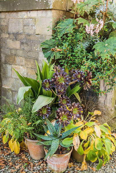 Collection of pots containing succulents, cacti, ferns, cuphea, begonia and aspidistra. Bourton House, Bourton-on-the-Hill, Moreton-in-Marsh, Glos, UK