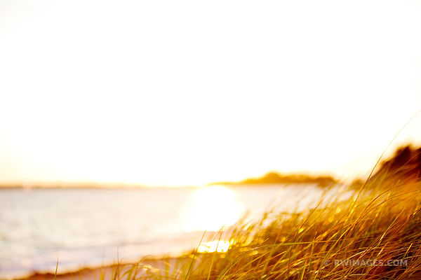 CAPE COD AUTUMN GRASSES SUNSET NATURE ABSTRACT COLOR