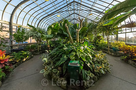 Tropical House in the Anna Scripps Whitcomb Conservatory in Belle Isle Park