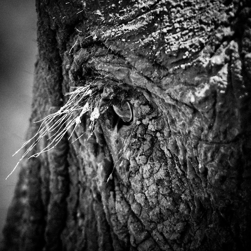 8483-Eye_of_elephant_Namibia_2008_Laurent_Baheux