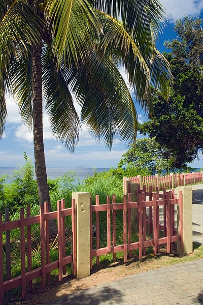Pink Fence and Palms