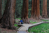Visitor to the Giant Sequoia's