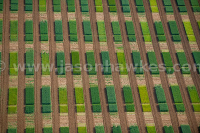 Aerial view of crop sequencing experiment