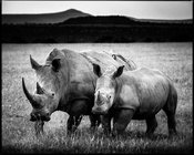 4383-Baby_rhino_protected_by_his_mum_Kenya_2013_Laurent_Baheux