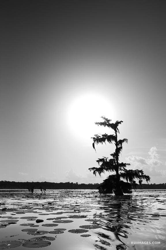BALD CYPRESS TREES LAKE MARTIN LOUISIANA SWAMP BLACK AND WHITE VERTICAL