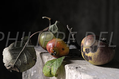 Nature morte: photos de fruits   Photos,photographies,photographes,photographes professionnels,images,tirages,expos photos,expositions photo,ventes photos