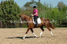 Chestnut warmblood gelding working in outdoor sand school