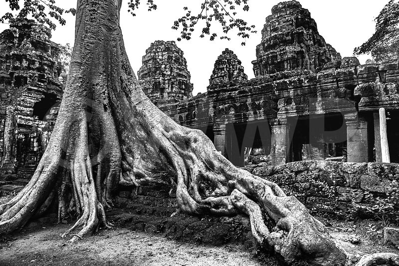 WW_P5999-Cambodia-Angkor-Wat-Temple-Tree-on-ruins