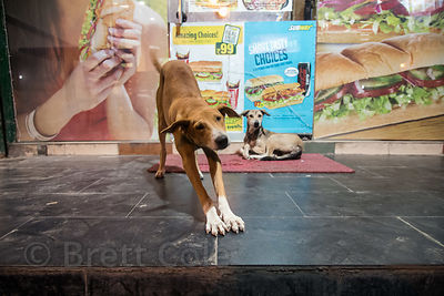 Street dogs in front of a Subway restaurant in Delhi, India