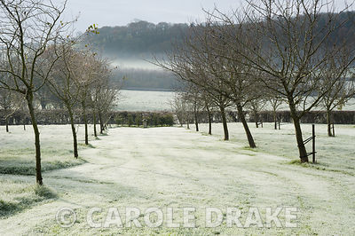 An avenue of trees leads towards an urn set against a hedge that forms the southernmost boundary of the garden, with Herefordshire countryside beyond.