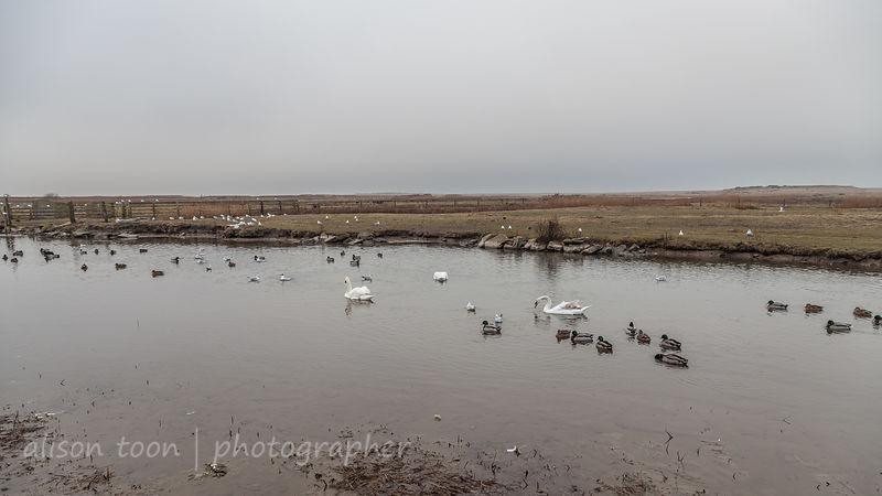Salthouse duck pond