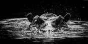 5428-Hippo_under_the_dark_water_Laurent_Baheux
