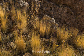 Autumn Grasses in John Day Fossil Beds National Monument