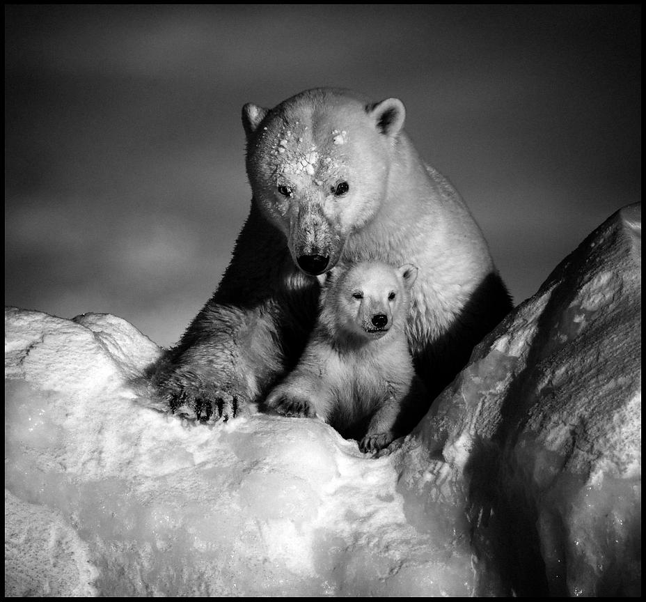 5170-Stronger_together_Polar_bear_with_cub_Baffin_Island_Canada_2016_Laurent_Baheux