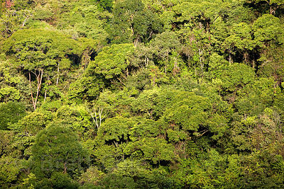 Distant view of primary forest canopy, Las Nubes, Costa Rica