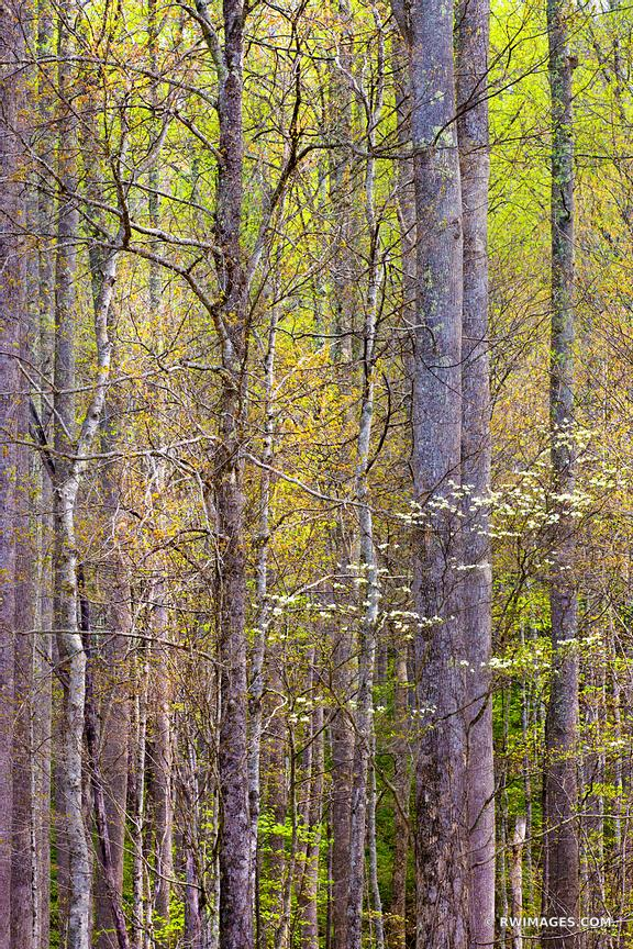 SPRING FOREST SMOKY MOUNTAINS COLOR VERTICAL